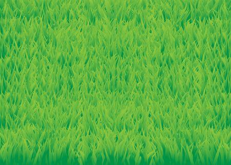 The green grass background. Grass field texture Stock Photo - 6744547