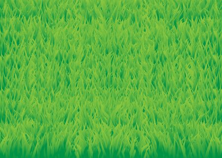 The green grass background. Grass field texture Stock Photo - 6744547