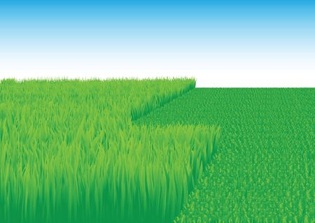 Overgrown and oblique grass on the white background Stock Photo - 6744553