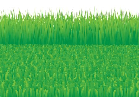 Overgrown and oblique grass on the white background photo