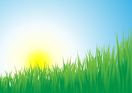 Growing grass on a sunrise background photo
