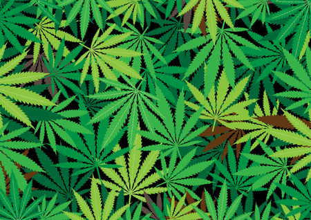 stoned: The green hemp, cannabis leaf background texture