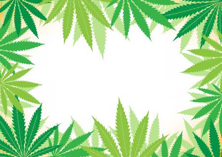 The green hemp, cannabis leaf white framework background