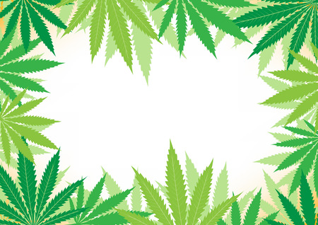 The green hemp, cannabis leaf white framework background Vector
