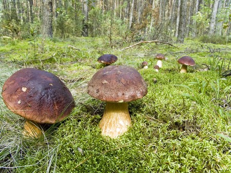 The fantastic mushroom glade in wood photo