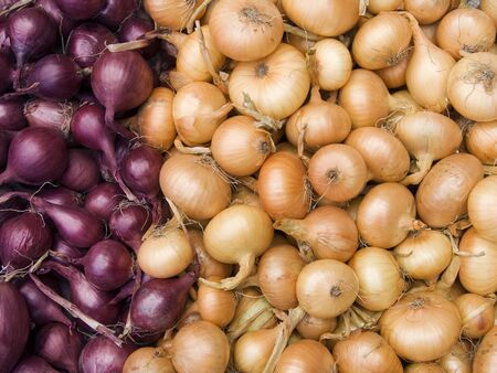 Agricultural background, a pile of beautiful bulb onions photo