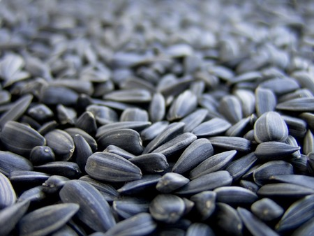 Dry sunflower seeds, on a macro for background