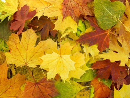 the  beautifu autumn leaves season  background Stock Photo - 8017304