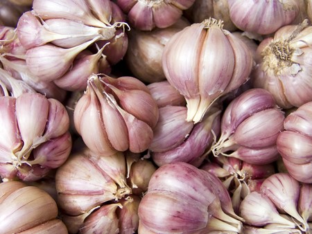Agricultural background, a pile of beautiful garlic photo