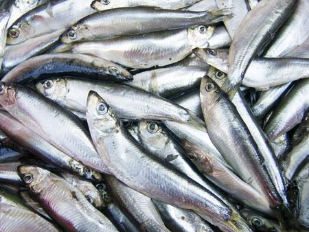 coger: Un mont�n de hermosos peque�os peces en un contador