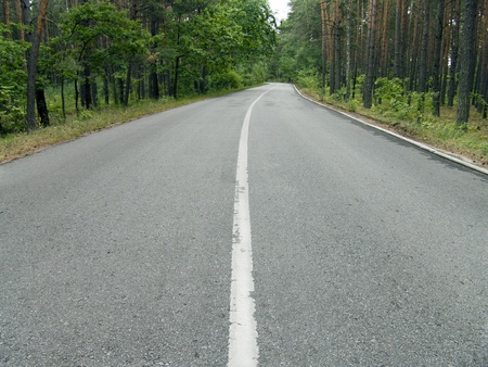 The wide asphalt road in a wild pine woods Stock Photo - 15652705