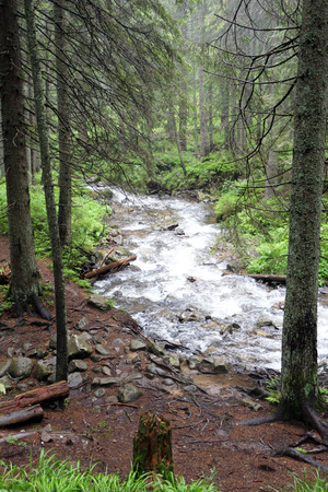 The forest Carpathian Mountain river Prut, which beginning run on Mount Hoverla