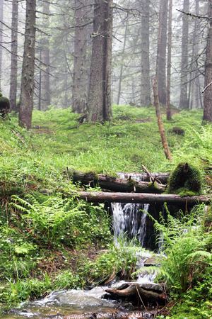 The forest Carpathian Mountain stream, which beginning run on Mount Hoverla and make river Prut