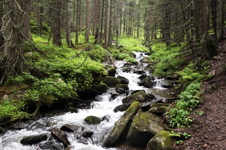 The forest Carpathian Mountain creek, which beginning run on Mount Hoverla and make a river Prut