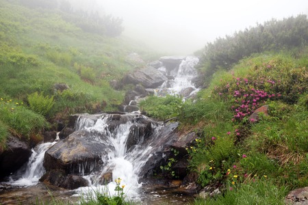 The Carpathian Mountain river Prut, which beginning run on Mount Hoverla