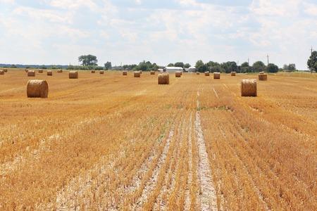 slant: The haystacks on a slant sunny field and a farm on the horizon