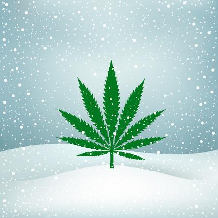 Growing cannabis hemp marijuana green leaf on white and blue snow Christmas background