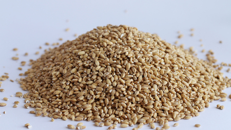 Pile of wholegrain of pearl barley or wheat spill on white background. Agriculture food raw seed. Closeup macro photo