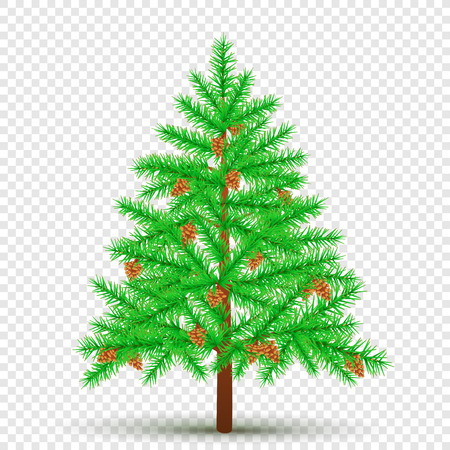 spruce with cones transparent background