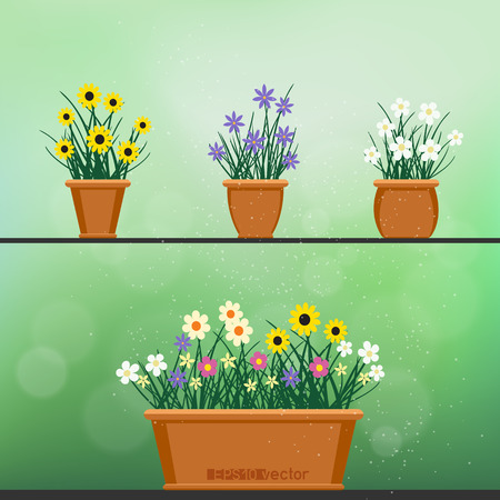Flowerpot with flowers plant and grass on green blur bokeh background. Nature spring or summer abstract flora set. Chamomile cornflower violet snowdrop bouquet grow in pot. Easy to edit