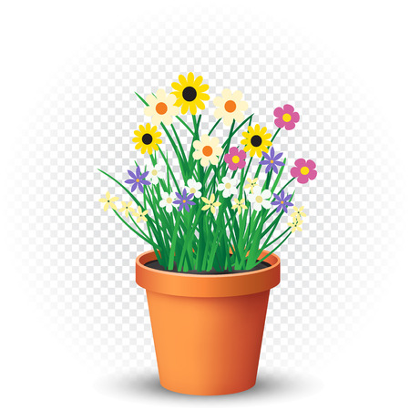 Flowerpot with flowers plant and grass on white transparent background. Nature spring or summer abstract flora illustration. Chamomile cornflower violet snowdrop bouquet grow in pot. Easy to edit