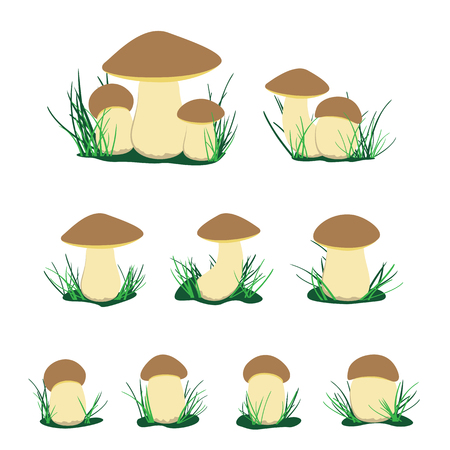 White cep mushroom illustration set. Cartoon brown cap boletus isolated on white background. Easy to edit Illustration