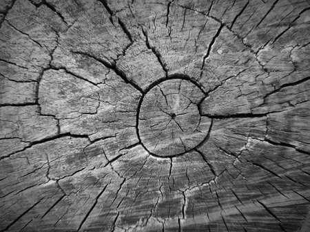 Cut tree stump walnut texture