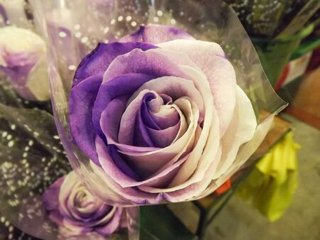 artificially: Beautiful artificially colored big purple rose in the market Stock Photo