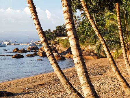 sandal tree: Beautiful tropical beach landscape in the summer