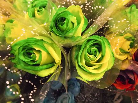 artificially: Green and yellow artificially colored beautiful roses