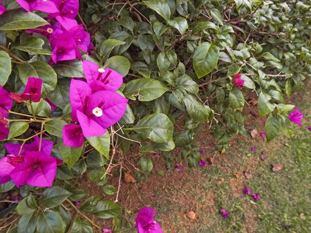 열 대 정원에 꽃입니다.