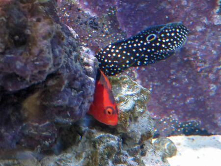saltwater fish: saltwater fish Stock Photo