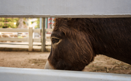In the eyes of the little horse that seem to is sad and grief. We can know from the eyes of animals that convey it to we know.