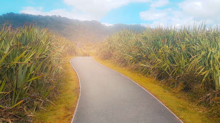 Green natural view and the road to success.with a tough road to make your business to that destination and use it as a background. Stock Photo