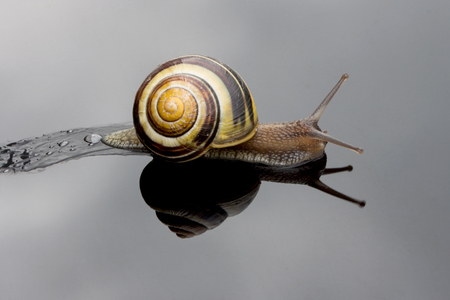 gastro: snail leaves slimy trail