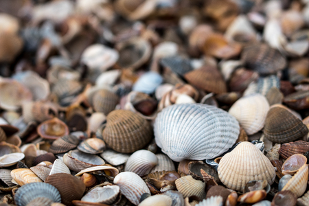 closup of shells at beach