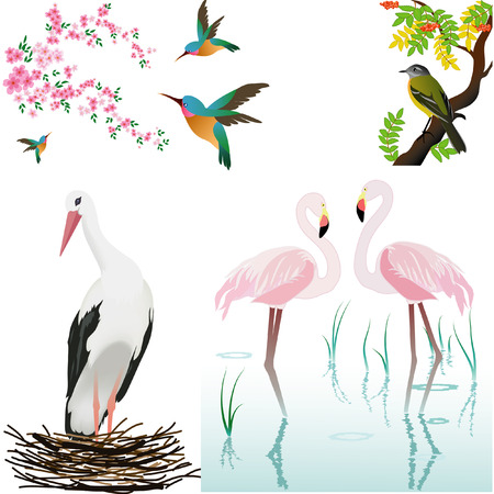 black stork:   illustration with birds