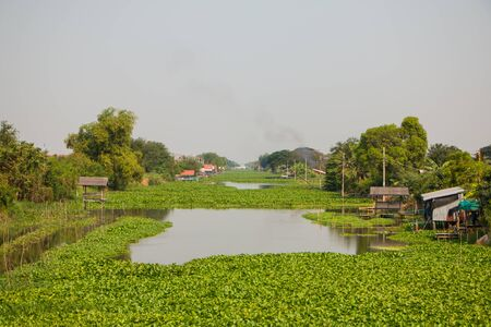 water pollution: Large amount of water hyacinths float on canal