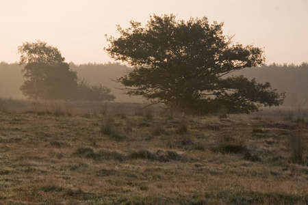 reclamation: Morning view of trees in Holland