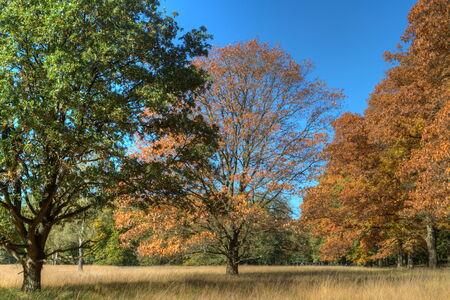 Autumn on the Veluwe, Netherlands
