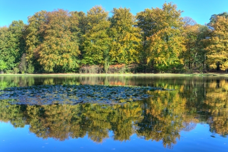 Pond with autumn trees on the Veluwe at St  Hubertus Hunting Lodge, Netherlands