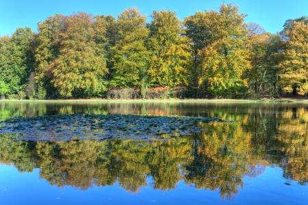 veluwe: Pond with autumn trees on the Veluwe at St  Hubertus Hunting Lodge, Netherlands