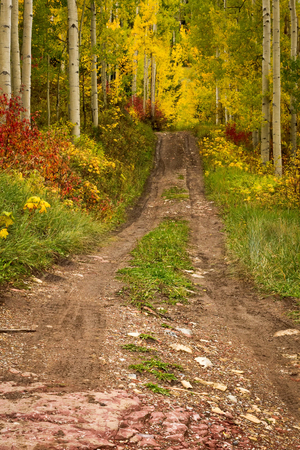aspen grove: A hiking trailleading into the Aspen grove in the Fall Stock Photo