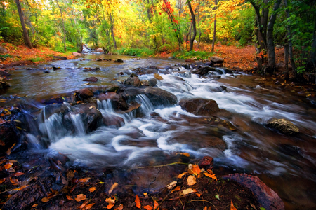 Changing leaves along Fountain creek in Manitou Springs, Colorado
