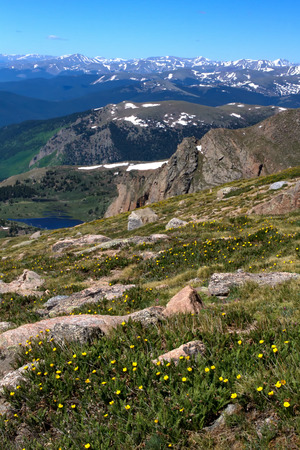 evans: The View from Mt Evans looking over the Continental Divide with a field of tundra flowers blooming