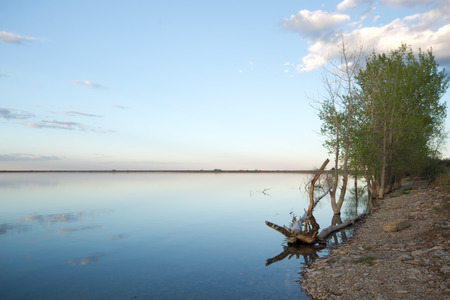 lon: A tree grows on the shores of Lon Hagler reservoir in Larimer County, Colorado Stock Photo