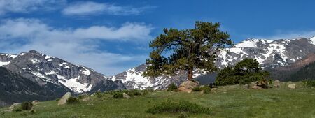 rocky mountain national park: A lone evergreen grows on a hill in inside of Rocky Mountain national Park outsude of Estes Park Colorado Stock Photo