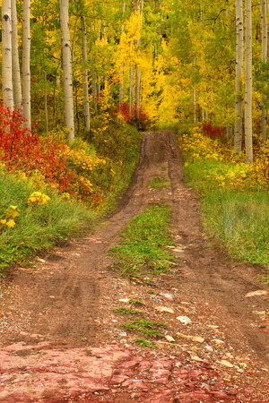 I love heading off to the mountains during the autumn season here in Colorado. Beautiful Colors along this dirt road
