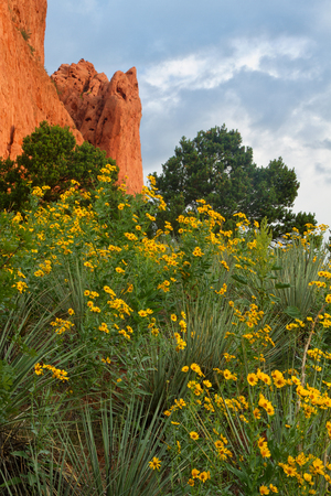 Summertime Wildflowers At Garden Of The Gods Stock Photo, Picture ...
