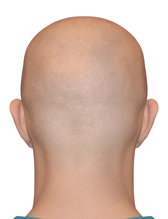 human head: Smooth shaved nape isolated on white background. Bald human male head.